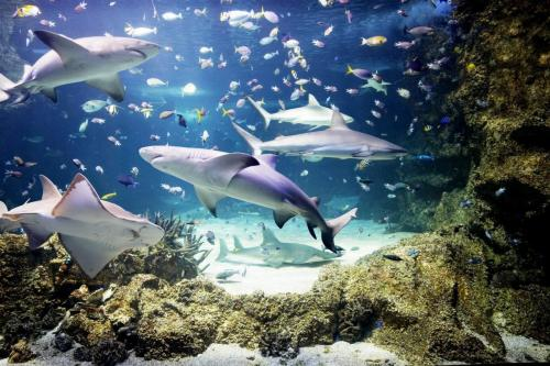 tunel-oceânico-sea-life